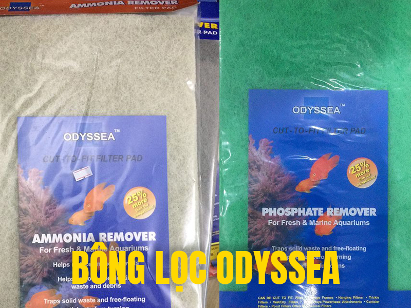 bong loc odyssea 1590131903