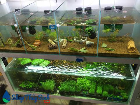 Danh sách các dòng cây thủy sinh cắt cắm dễ trồng nhất