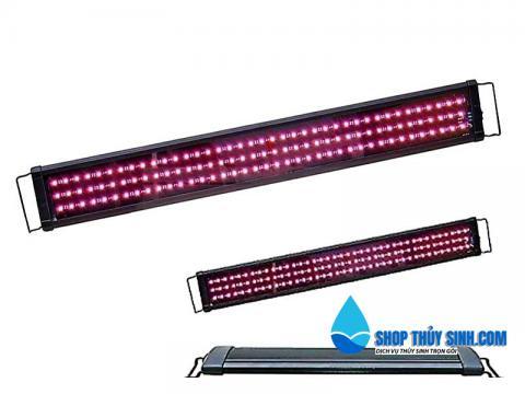 Đèn led Beamswork chuyên dụng cho cá rồng Huyết Long lên màu