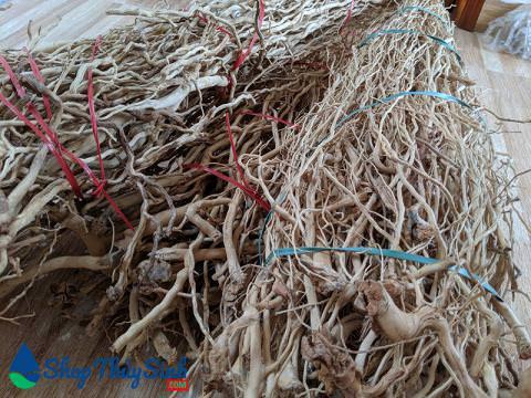 Lũa rễ rừng hàng đẹp tự nhiên đã phơi khô