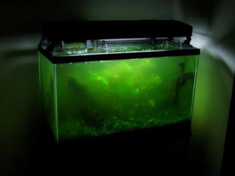 Xử lý hồ thủy sinh bị rêu hại và tảo hại gây mất thẩm mỹ